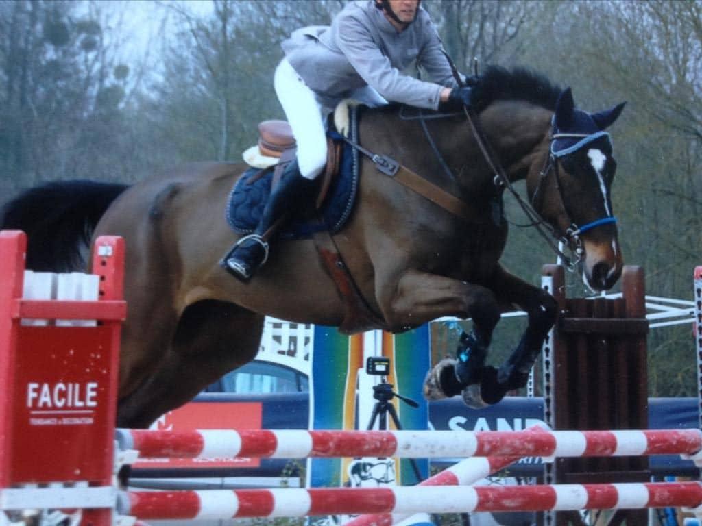 Ecurie Stéphane LUNEAU - Pension cheval/poney, valorisation de chevaux de sport et vente de chevaux